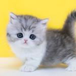 안전 고양이분양업체 나비캣, 가을맞이 30% 할인 이벤트 시작