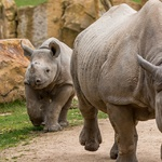아프리카의 야생동물을 보호하는 IoT 기술