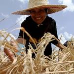 말레이시아 농부들, 작물 관비에 IoT 사용