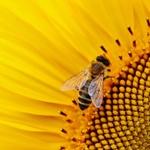 """최첨단 매핑 전문가, """"자연 개체군 감소하면 로봇 꿀벌의 활약에 주목해야"""""""