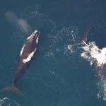 """해양 연구진 """"대형 해양 동물 죽음 막으려면 새로운 어업 기술 사용해야"""""""