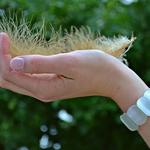 손톱으로 보는 건강, '손톱 갈라짐' 관리 방법은