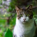 샤프, AI와 IoT 도입한 고양이 화장실 선봬