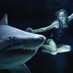 상어에 대한 공포 이용해 사이버 보안 경각심 높인다