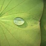 북극곰 모피와 연잎의 방수기능 모방하는 나노섬유 카펫 개발